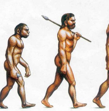 Evolution der Adipositas.